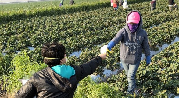 Farmworkers giving out masks