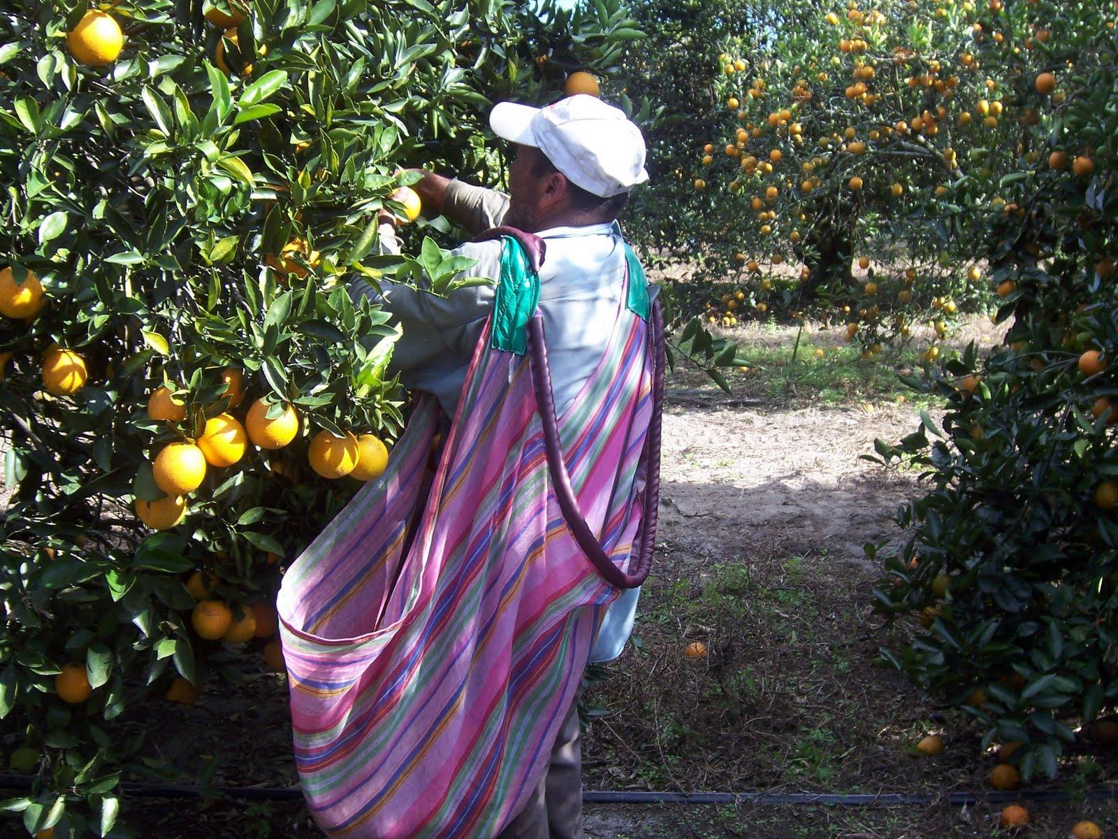 citrus worker